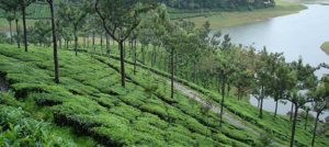 Kerala 05 Nights/06 Days Tour 04