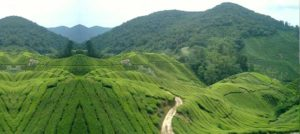 Kerala 13 Nights/14Days Tour 05