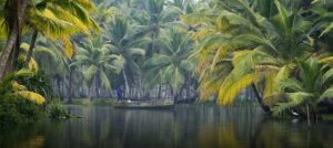 Kerala 07 Nights/08 Days Tour 05