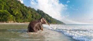 Kerala 04 Nights/05 Days Tour 09